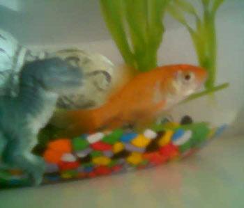 Tiranosaurius rex y pez naranja no pasa nada for Mi pez nada de lado